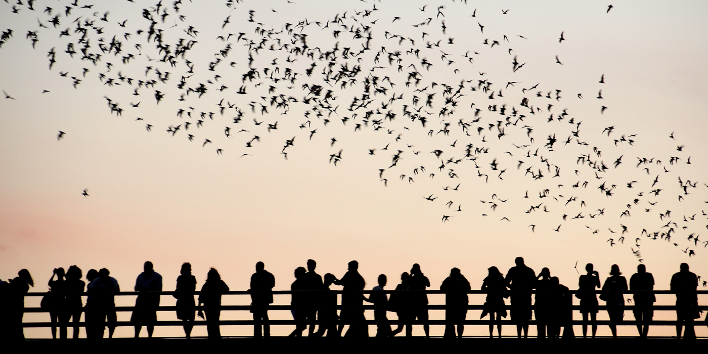 Visit South Congress Bridge Bats in Austin...