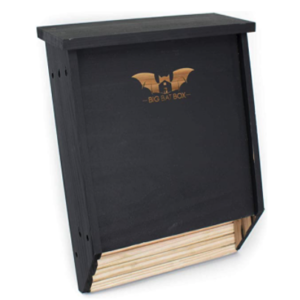 Premium 2-Chamber Cedar Bat House